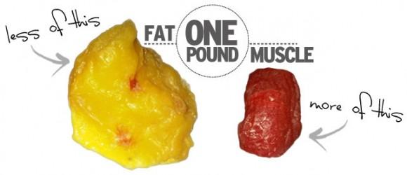 how_it_works_muscle_fat1-580x250.jpg